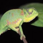 Chameleons, seizing opportunities and thriving in a post Retail Distribution Review landscape